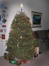 Christmas_tree_1005